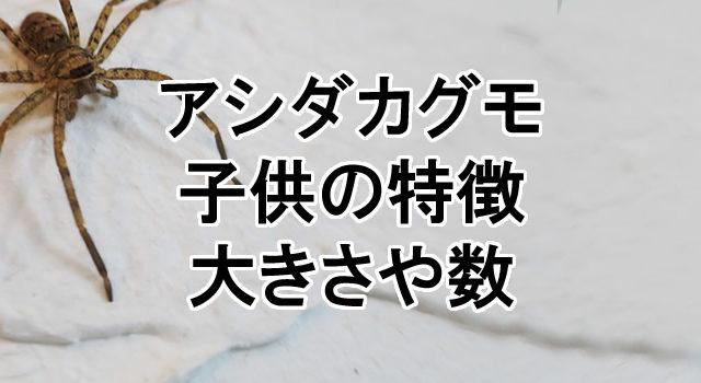 アシダカグモの画像 p1_36