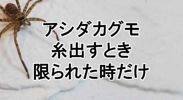 アシダカグモの画像 p1_25