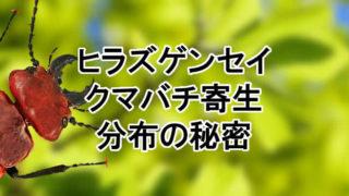 ヒラズゲンセイ クマバチ